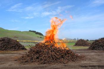 Biochar Vineyard Waste from Wines & Vines