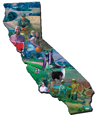 Montage photo in shape of California
