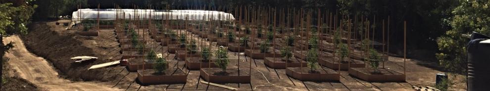 Cannabis Production Survey