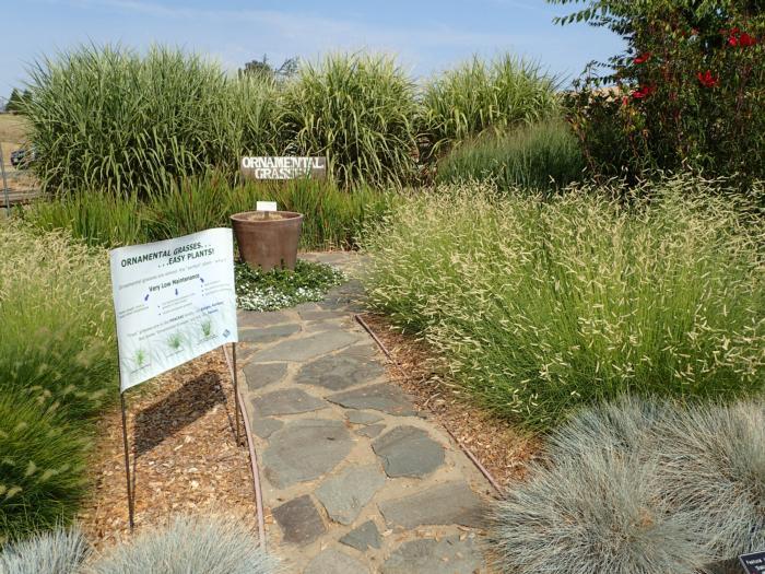 Ornamental Grasses Ucce Master Gardeners Of El Dorado County