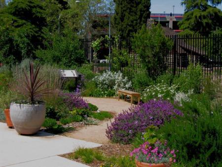 UCD Terrace native