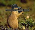 Squirrels DAMAGE your property