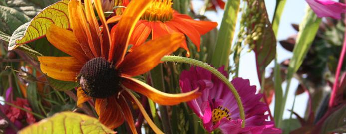 ivcflowers