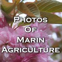 photosofmarinagriculture