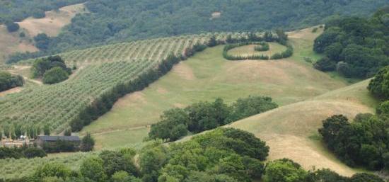 Olive Hills Cropped