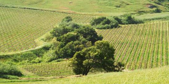 Wine Hills Cropped