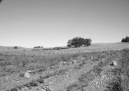 potatofield22