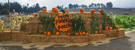 Marketing_pumpkins