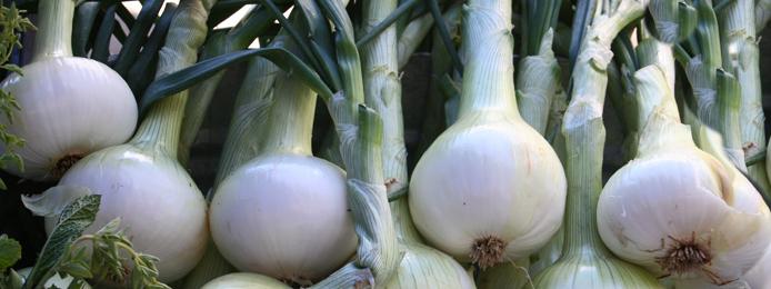Consumer Deamnd_onions