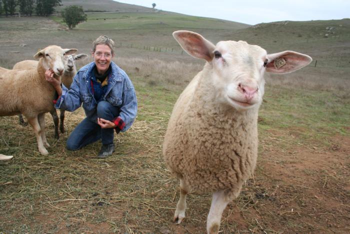 Permitting_sheep
