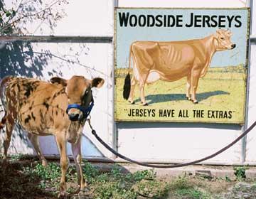 Woodside Jerseys