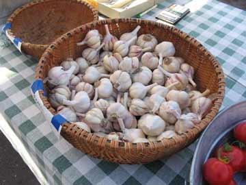 Point Reyes Garlic