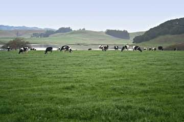 Winter grass crop