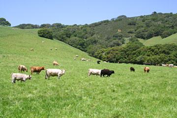 Spring herd