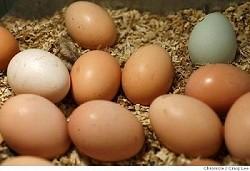 IsOrganicBetter-fd_eggs01_075_cl