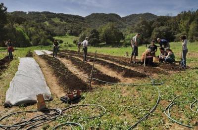 IVC Organic garden