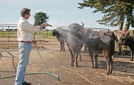 Craig Ramini with buffalo