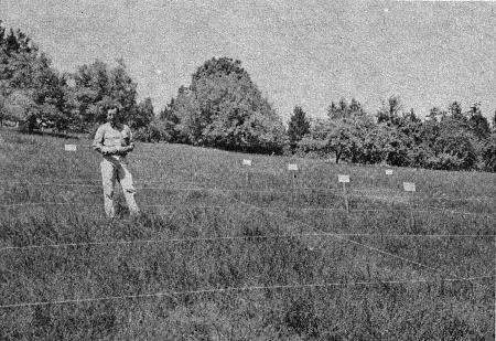 Alfred H. Murphy in the field during experiments.