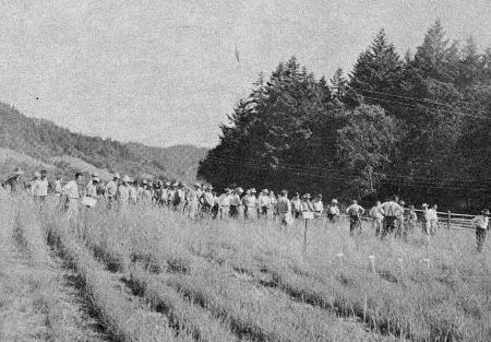 Before release of the beetle, there had been hundreds of  demonstration and experimental plots.