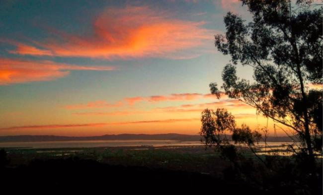 Eucalyptus - Berkeley Hills