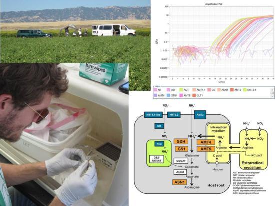 gene expression collage