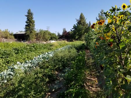 Part of the vegetable cropping system at Quaker Oaks Farm. Photo by Shulamit Shroder