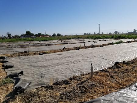 Black plastic tarps provide weed control. Photo by Shulamit Shroder