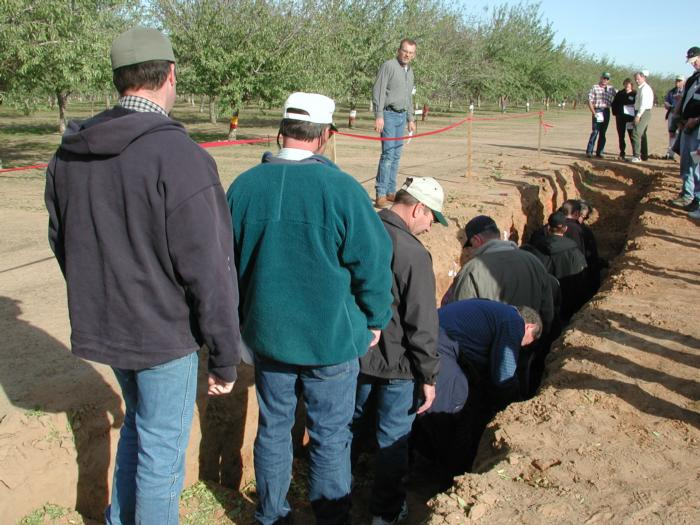 Soil pit for Almond Short Course November 2002