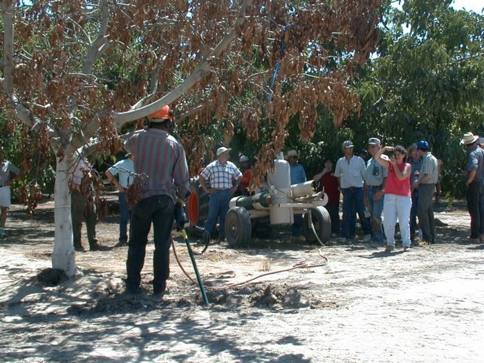 Walnut farm advisor tour June 2000