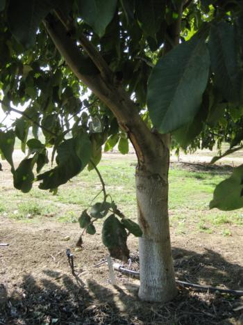 pressure chamber bag in walnut