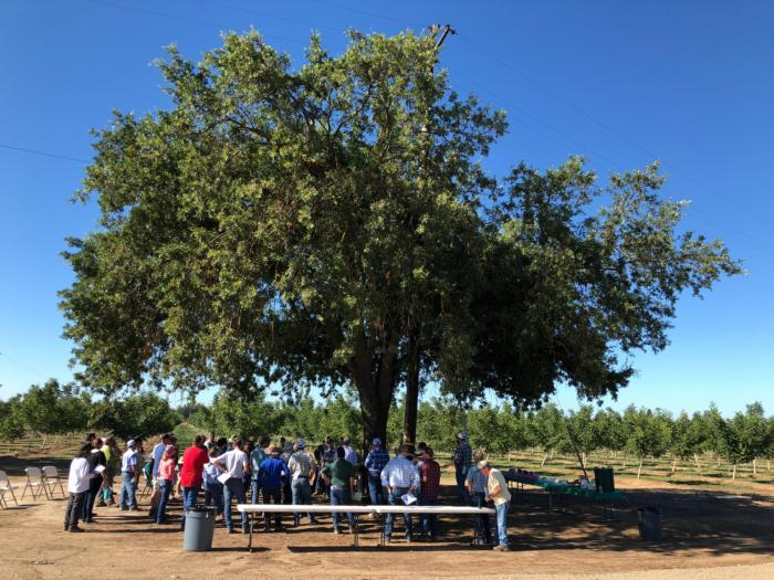 Rootstock and pressure chamber field day