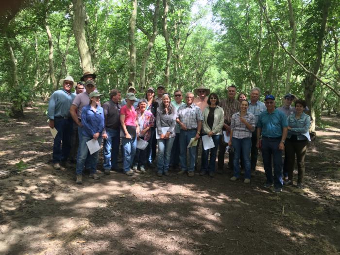 Walnut farm advisor tour Northern Sacramento Valley June 17 2017