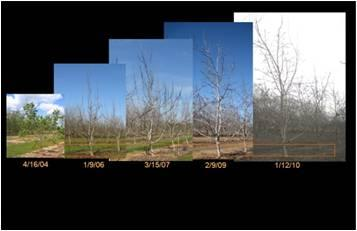 Effect of pruning and crop load on canopy development