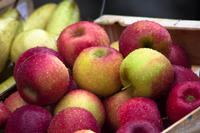 Apple Varieties for Cooking, Baking & Cider