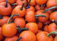 Home Preserving Pumpkins