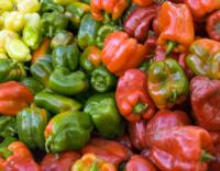 Bell peppers red green yellow