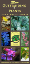 More Outstanding Plants for Alameda County - UCCE