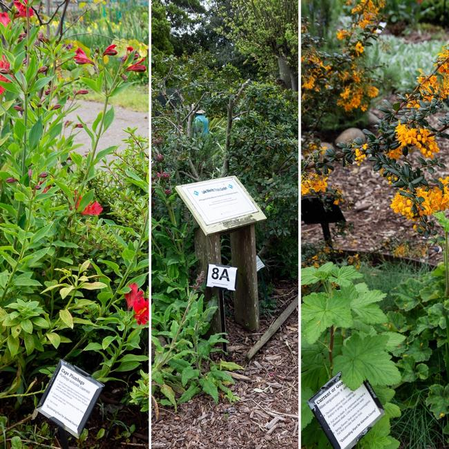 Station 8 - Outstanding Plants April 2019