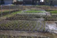 One valve watering 3 plots