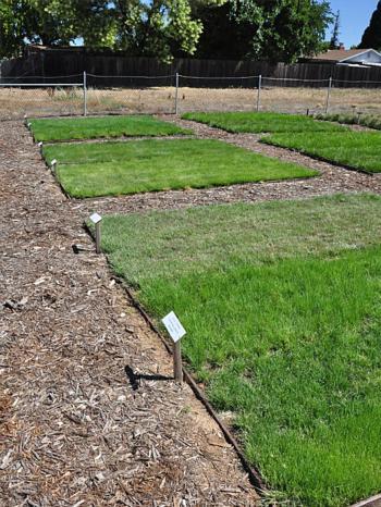 Six Native Grasses