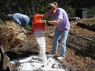 Planting A Succulent Garden Uc Master Gardeners Of San