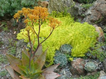 Succulents provide striking texture and color.