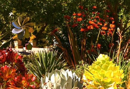 Meditteranean Plant Garden_closeup