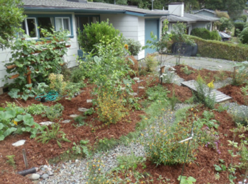 Rain Gardens An Attractive Solution To A Challenging