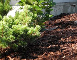 Mulch improves soil quality, among other benefits.