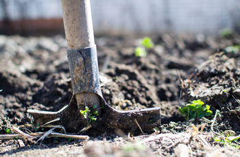 Adding organic material is key to amending clay soil. Photo: Lukas, Pexels