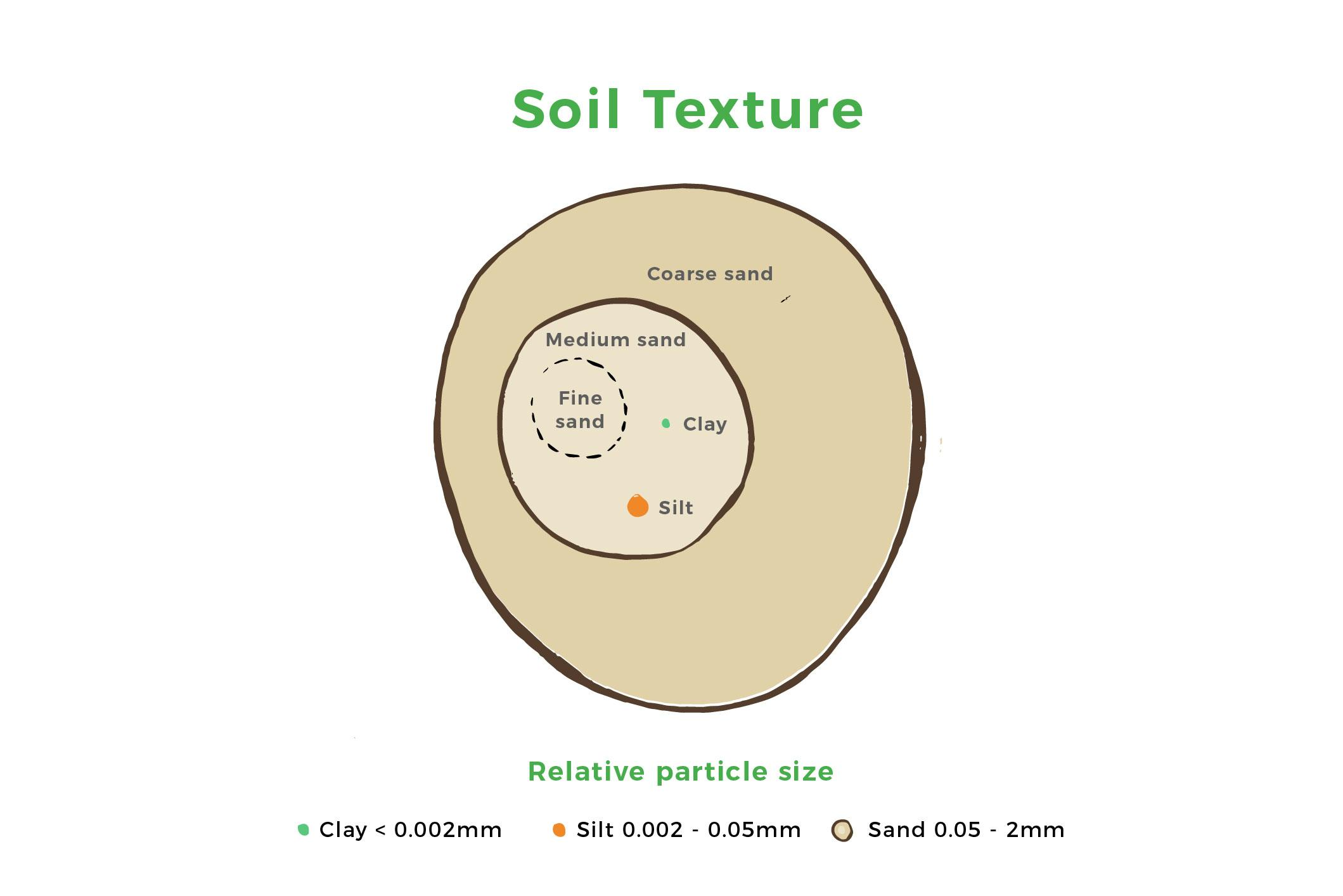 Soil texture relates to the mixture of three particle types - sand, silt and clay. GrowingObservatory.org