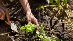 woman-planting-sapling-in-garden-9L3G242