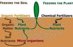 Organic fertilizers support the soil food web. Matrixxco