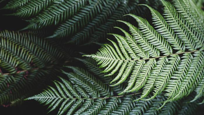 high-angle-close-up-of-fern-leaves-JV93J7T